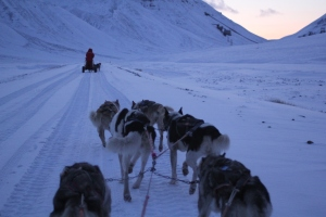 Dogsledding outside Longyearbyen