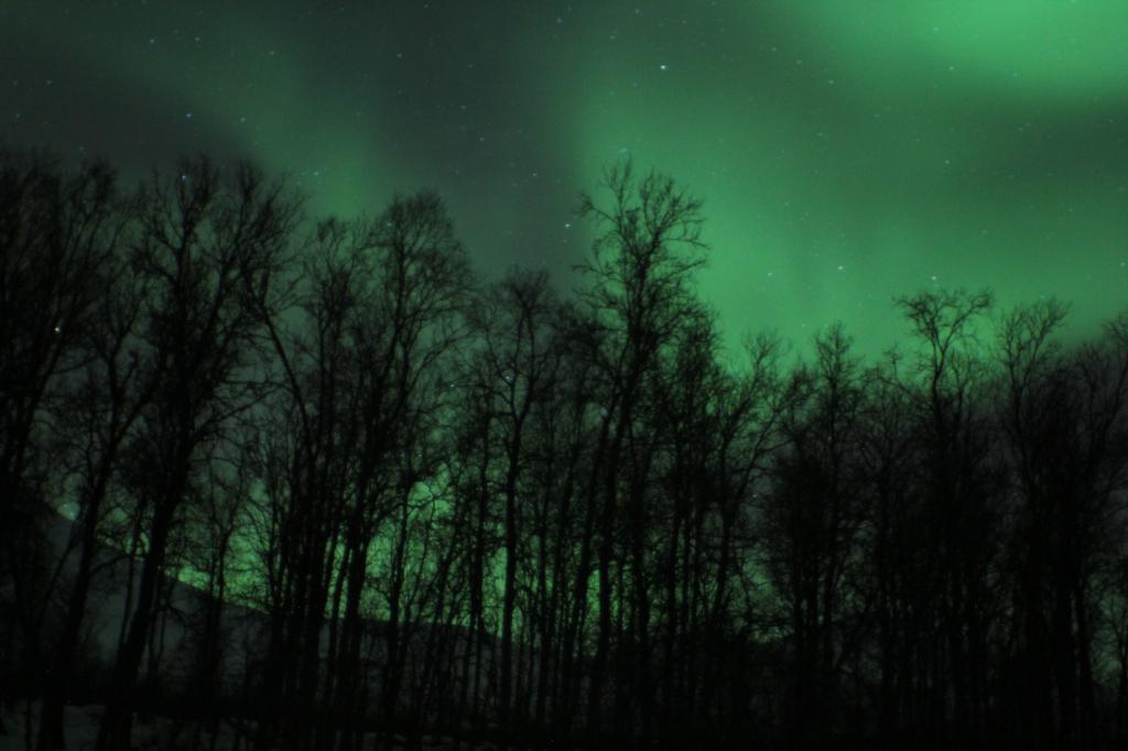 green aurora over trees