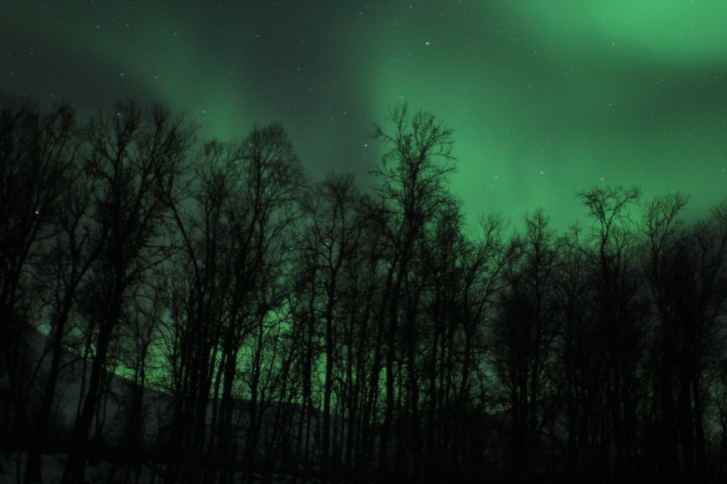 green aurora over trees