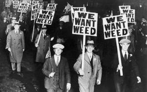 We Want Weed!
